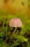 蘑菇年轻人 图库摄影