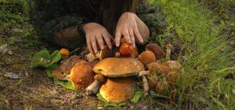 蘑菇庄稼  库存照片
