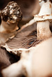 蘑菇接近  免版税图库摄影