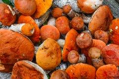 蘑菇收获  免版税库存照片