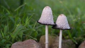 蘑菇时间间隔 股票录像