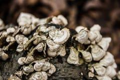 蘑菇春天 库存图片