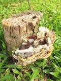 蘑菇木树桩 库存图片