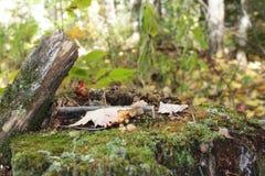 蘑菇村庄 免版税库存照片