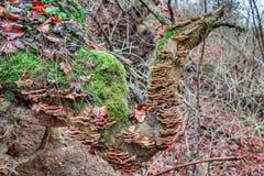 蘑菇树 免版税图库摄影
