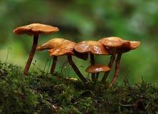 蘑菇桔子 免版税库存图片