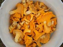 黄蘑菇桶 免版税图库摄影