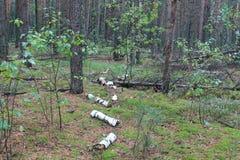 蘑菇森林在乌克兰 免版税库存图片