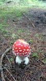 蘑菇森林 库存图片
