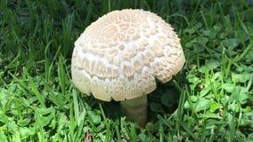 蘑菇植物被找到在公园 影视素材