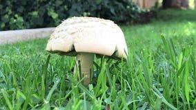 蘑菇植物被找到在公园 股票视频