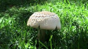 蘑菇植物被找到在公园 股票录像