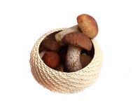 蘑菇橙色盖帽牛肝菌蕈类和牛肝菌蕈类 免版税库存照片