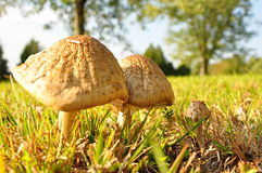 蘑菇欢欣 库存照片