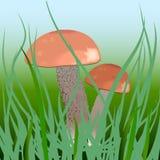 蘑菇润滑工 免版税库存图片