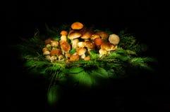 蘑菇王国 库存图片