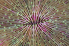 蘑菇珊瑚 库存照片