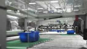蘑菇生产 生产线包装容器用蘑菇 蓝色容器沿传动机移动 ?? 股票视频