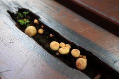 蘑菇生长 库存图片