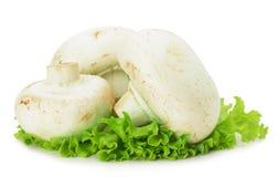 蘑菇用在白色背景隔绝的莴苣 库存照片
