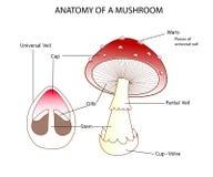 蘑菇的同水准 免版税图库摄影