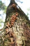 从蘑菇的轨道 免版税库存图片