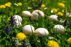 蘑菇神秘的美好的仙人圈  免版税库存照片