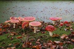蘑菇秋天 免版税库存照片