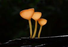 蘑菇竞选 库存照片