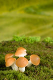 蘑菇童话背景 图库摄影