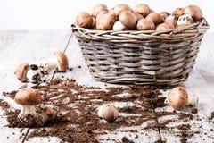 蘑菇篮子 免版税图库摄影