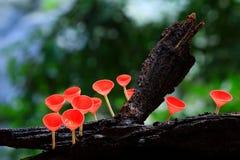 蘑菇粉红色 库存图片
