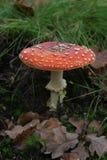 蘑菇红色 免版税图库摄影