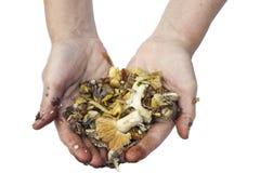 蘑菇纤巧的准备是一个卑鄙的勾当概念 免版税库存图片