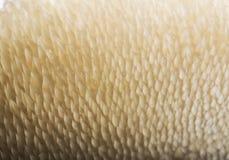 蘑菇纹理 免版税库存图片