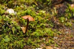蘑菇线索 免版税库存照片