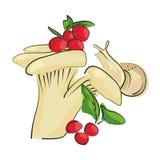 蘑菇草甸用莓果和蜗牛 免版税库存照片