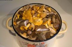 蘑菇蘑菇烹调厨房的产品食物 库存照片