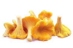 黄蘑菇蘑菇 库存图片