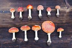 蘑菇蛤蟆菌小组在木背景 免版税库存图片