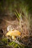 蘑菇蜗牛 免版税库存图片