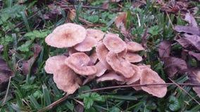 蘑菇补丁在森林 免版税库存图片