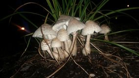 蘑菇补丁 图库摄影