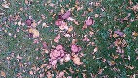 蘑菇被掩没 库存图片