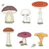 蘑菇设置了 免版税库存照片