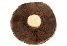 蘑菇路径 库存照片