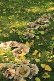 蘑菇道路 免版税库存图片