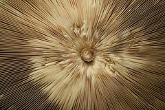 蘑菇遮阳伞 免版税库存照片
