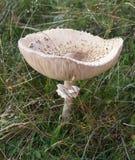 蘑菇遮阳伞 免版税图库摄影