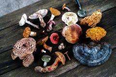 蘑菇采摘和搜寻 免版税库存图片
